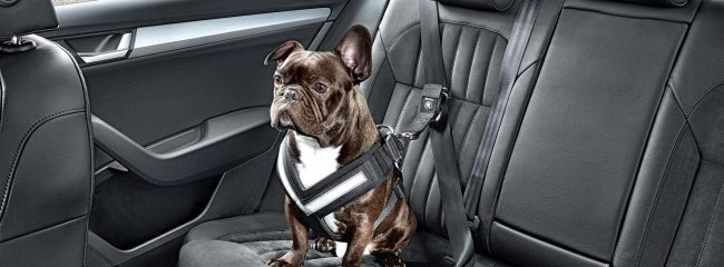 How to restrain a dog in a car, according to the Highway Code