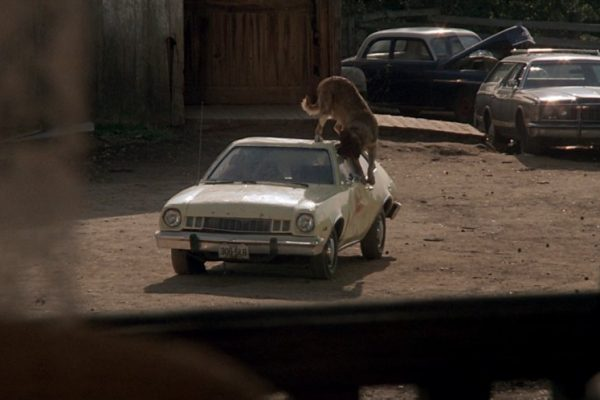 In which car do the main characters of Cujo seek shelter from their pet dog?