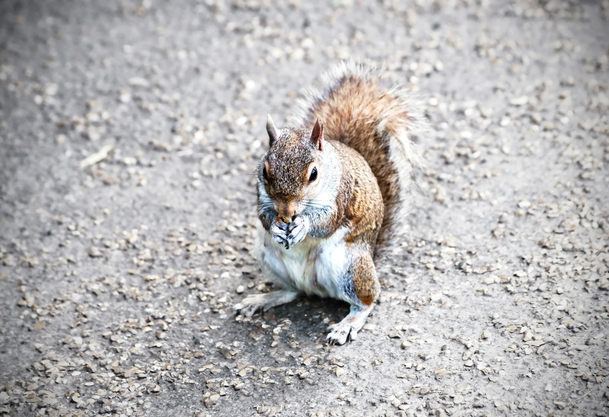 When a squirrel runs in front of your car what should you do?